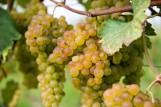 le-morette-uva