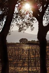Vigne e Querce zona Castiglione dP
